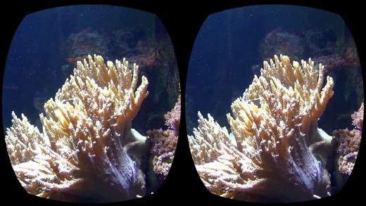 Aquarium Videos VR3